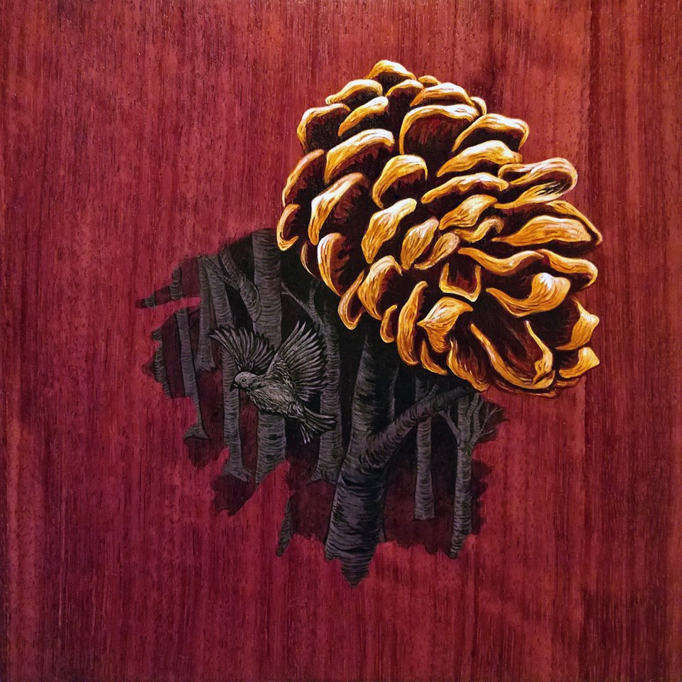 Pine Cone With Living Shadows